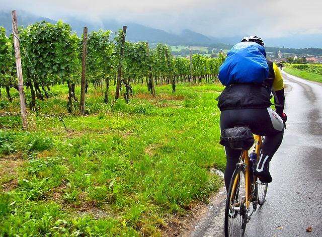 cyklista a vinice